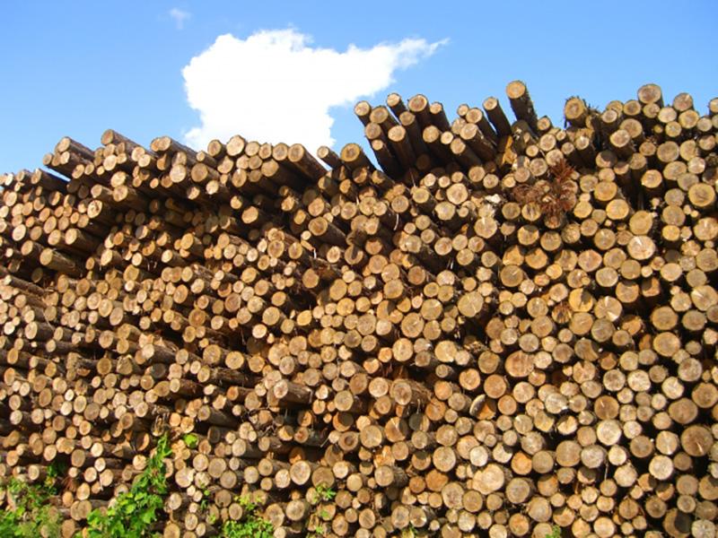 間伐材のイメージ写真